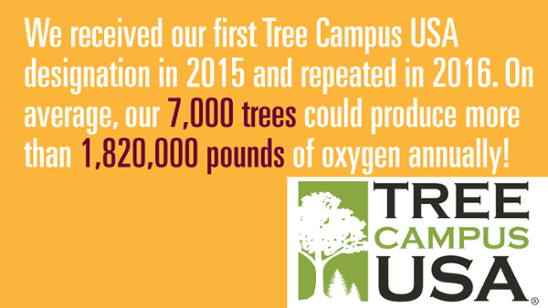 We received our first Tree Campus USA designation in 2015 and repeated in 2016. On average, our 7000 trees could produce more than 1,820,000 pounds of oxygen annually!