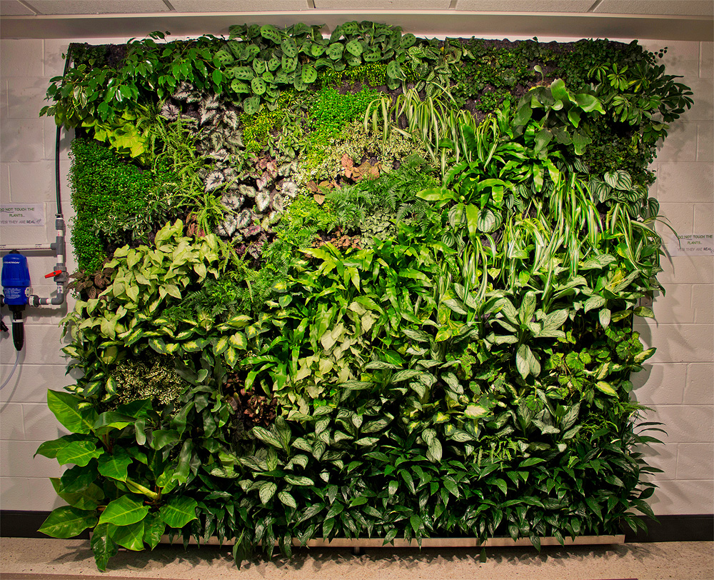 Vertical garden sustainability siu Green walls vertical planting systems